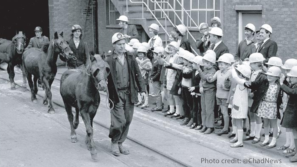 Pit Ponies emerge from Pleasley Colliery in the 1970s